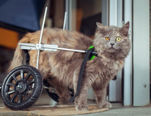 Helping Disabled Pets Live Full Lives