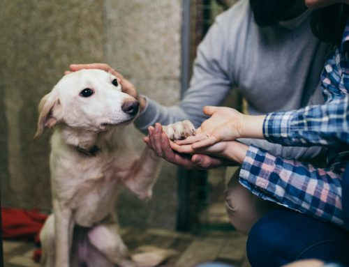 5 Reasons Why Adopting a Shelter Pet is Best