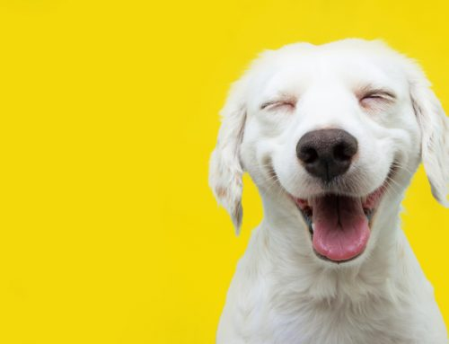Fear Not, Fido—Stress Reduction at the Veterinary Hospital
